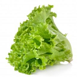 Органела зелена салата